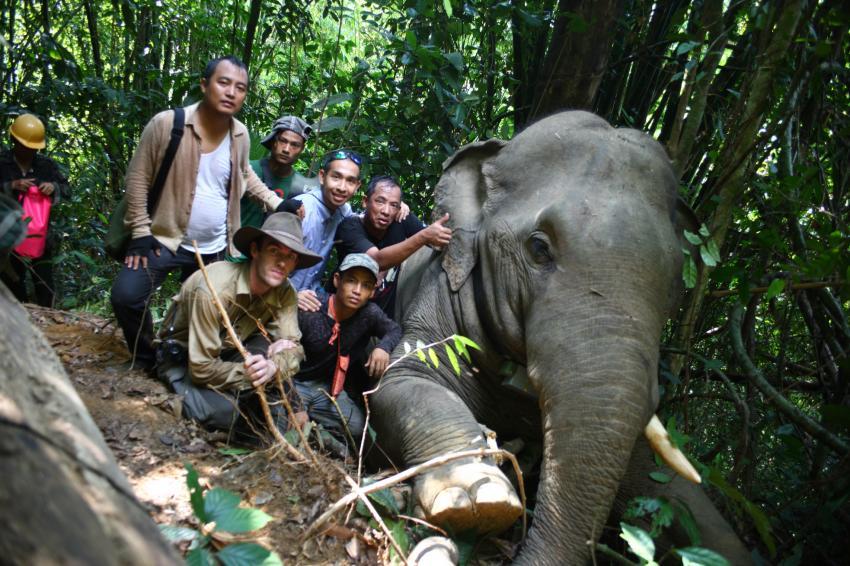 elephantteamphoto