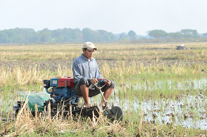 DSC 7198 Farmer using a small tractor to plow rice field in Bago Region. Photo Phoe Khwar copy