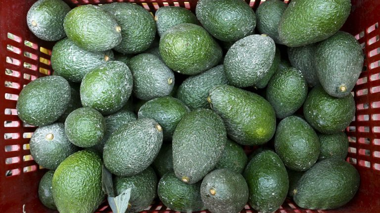 basket of avocados Photo Reuters 72