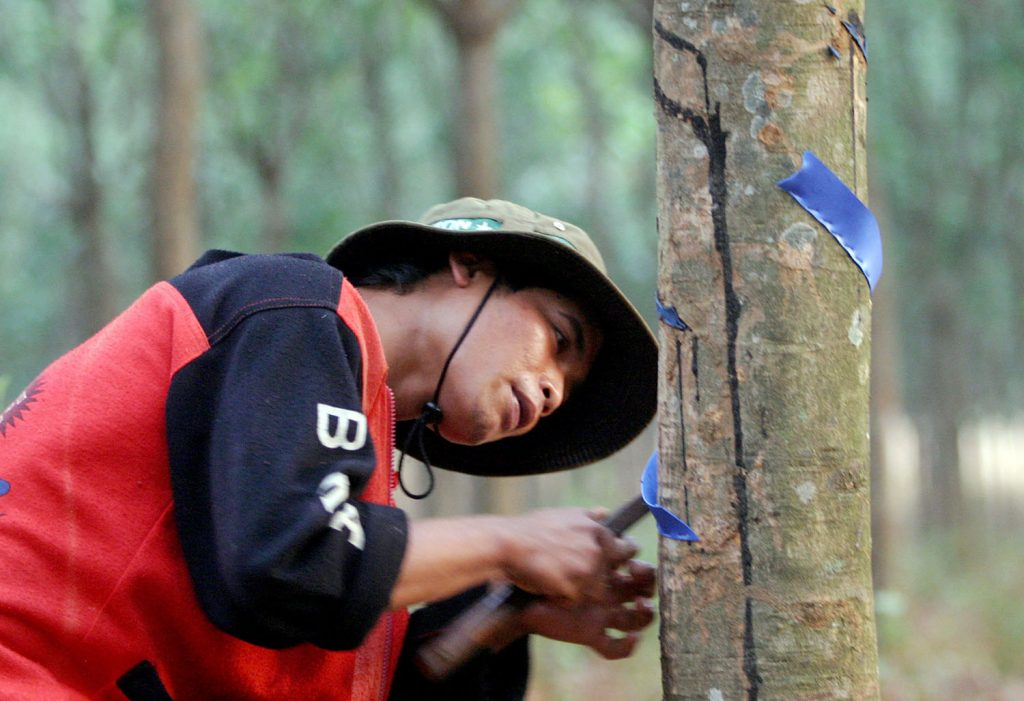A plantation worker scrapes rubber latex at a rubber plantation