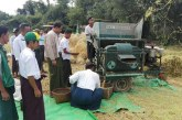 Harvest of monsoon paddy model plot carried out in Thandwe, Rakhine