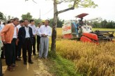 Union Minister  Dr Aung Thu inspects paddy harvesting