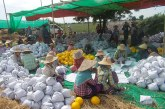 Thousands of muskmelons a day sent to Muse market