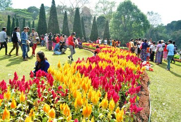 12th Pyin Oo Lwin flower festival to feature 200,000 flowers