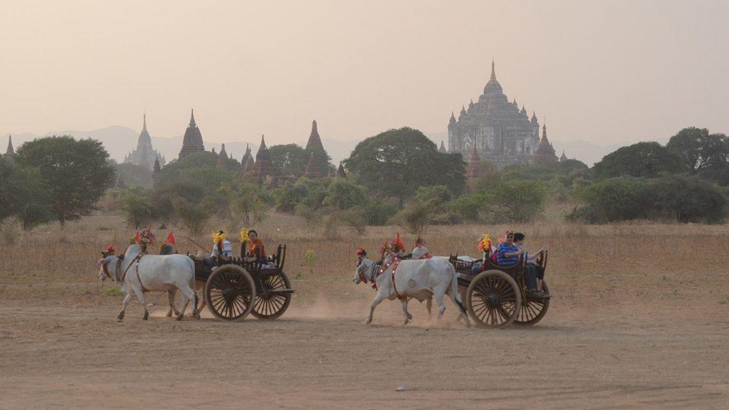Tourists take bullock carts visiting around Bagan. Photo: Phoe Khwar