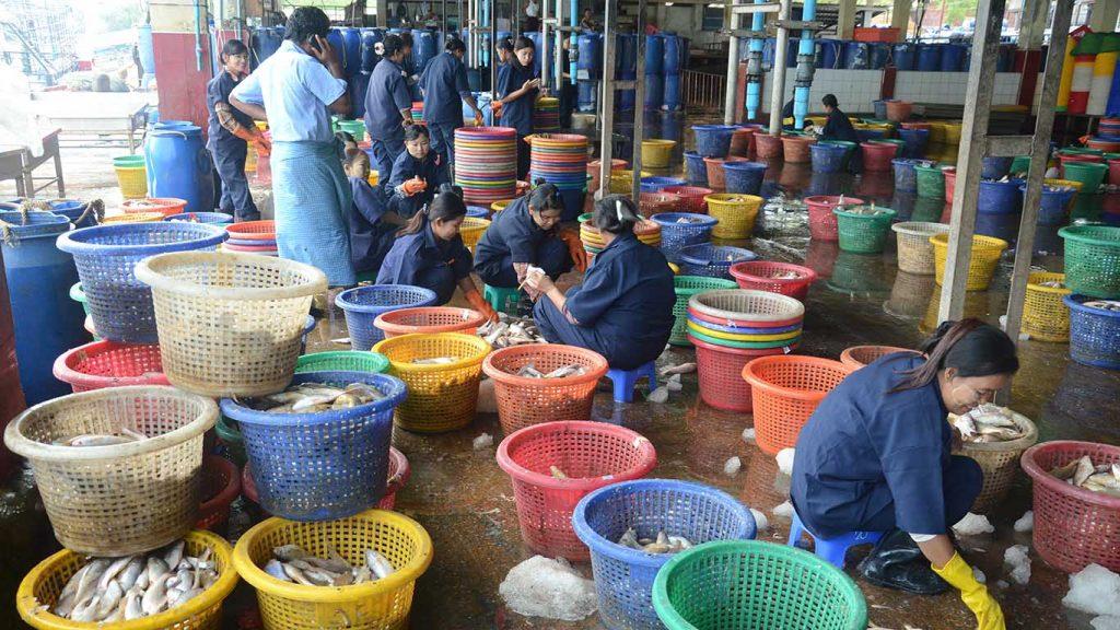Workers sort fish at Nyaung Tan Jetty in Yangon.Photo: GNLM/Phoe Khwar.