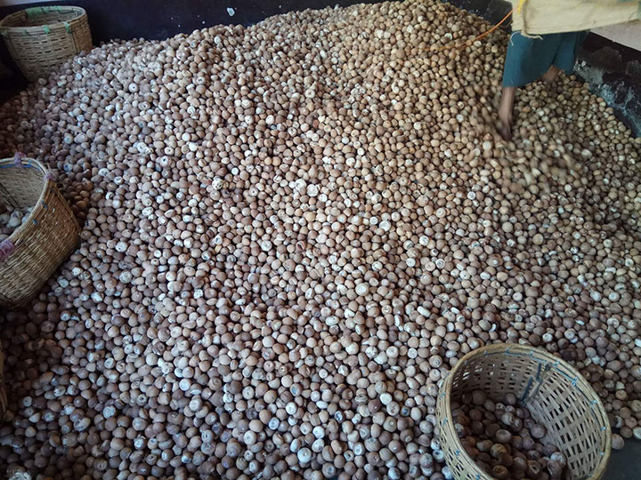 a file photo show a pile of betel nuts on the floor.