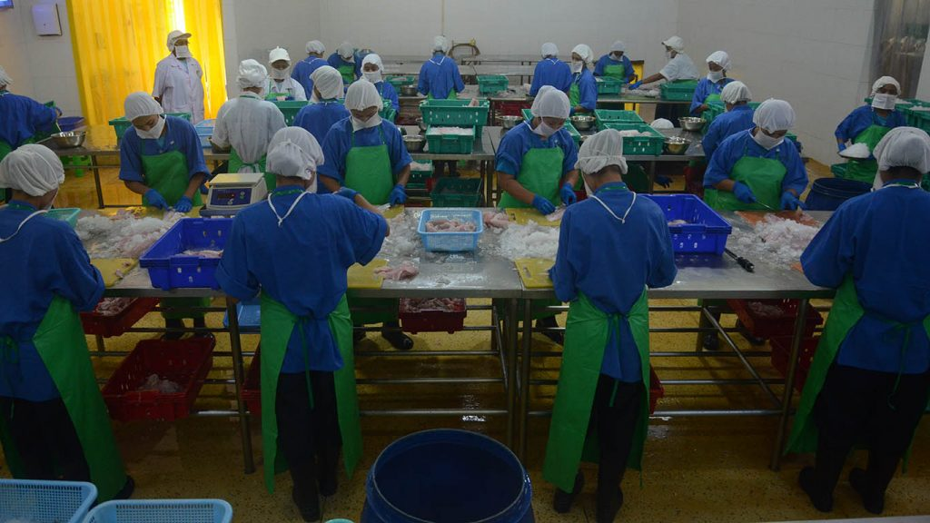 Workers process fish at cold storage factory in Yangon.Photo: Phoe Khwar