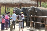 A visit to Ngaliketha Elephant Camp in Nay Pyi Taw