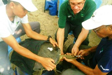 Rare species of Myanmar roofed turtles reared at Yadanabon Gardens in Mdy