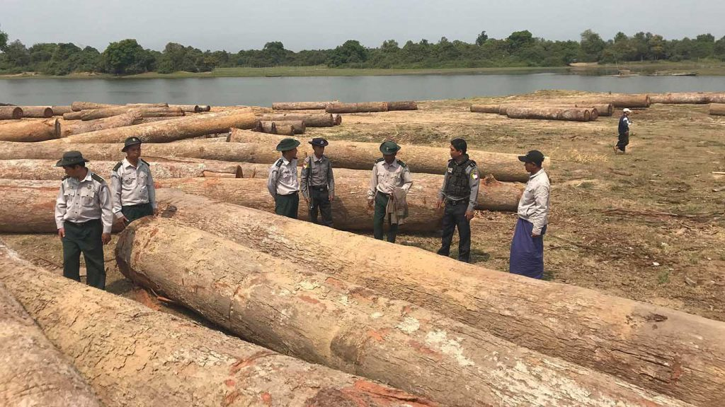 Officials from Forest Department inspects seized illegal Kanyin timbers near Thapyaypin village, Katha Township. Photo: Maung Chit Lin (Indaw)