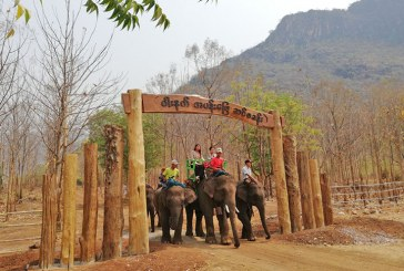 Visitors flock to Wanet elephant camp in Pyin Oo Lwin