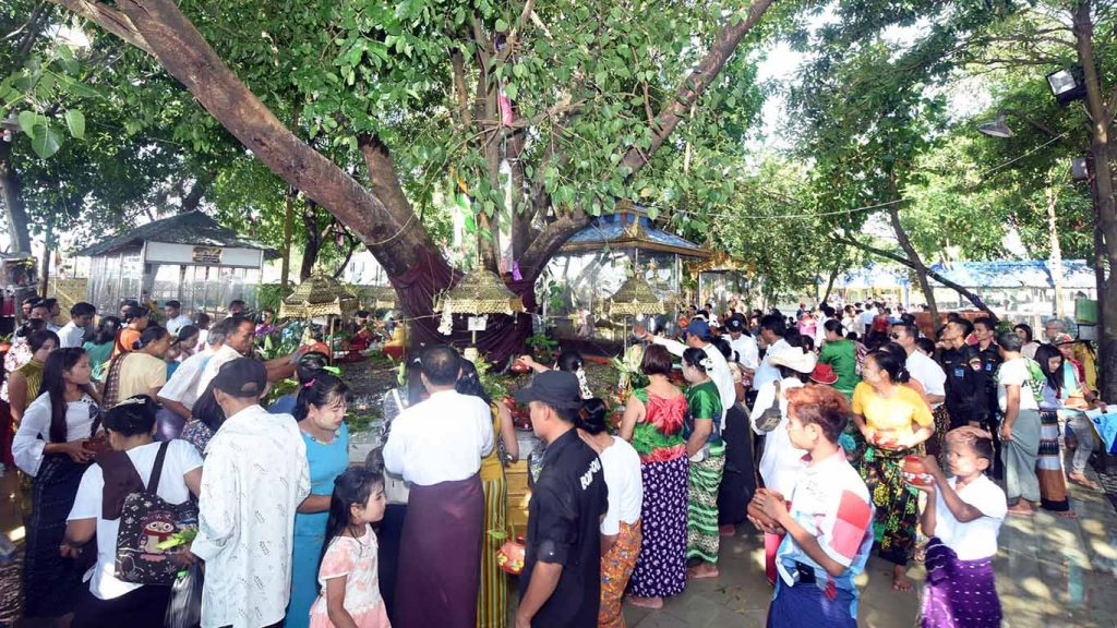 Buddhist devotees pour water on a Bodhi tree in the compund of Uppatasanti Pagoda in Nay Pyi Taw during Kason Full Moon Day. photo: MNA