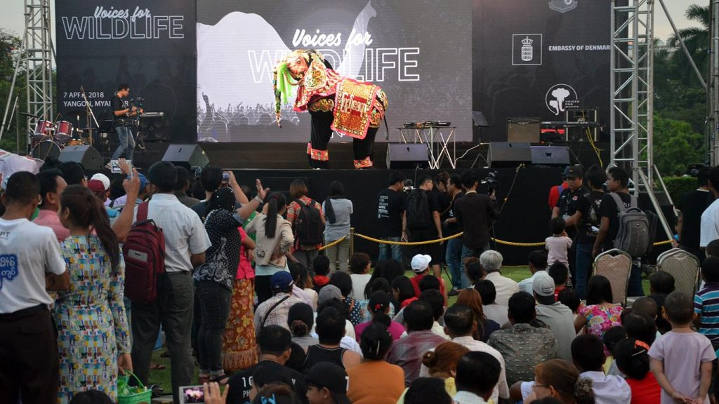 Visitors to Voices for Wildlife music festival enjoy elephant dance in Yangon.Photo: MNA