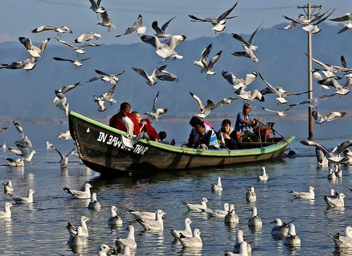 Birds soar near a visitor boat in Indawgyi lake in Mohnyin Kachin State which is to be preserved. Photo Salai Mang Ngai copy