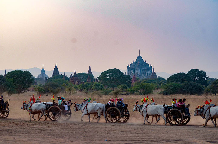 DSC 0727 Pagodas of Bagan with a procession of traditional carts in the foreground. Photo Phoe Khwar copy
