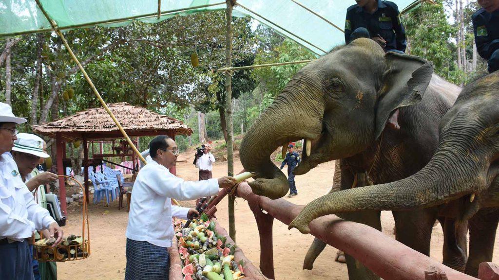 Vice President U Myint Swe feeds the elephants at Ngwesaung elephant camp on Pathein-Ngwesaung Road, Ayeyawady Region yesterday.Photo: Myanmar News Agency