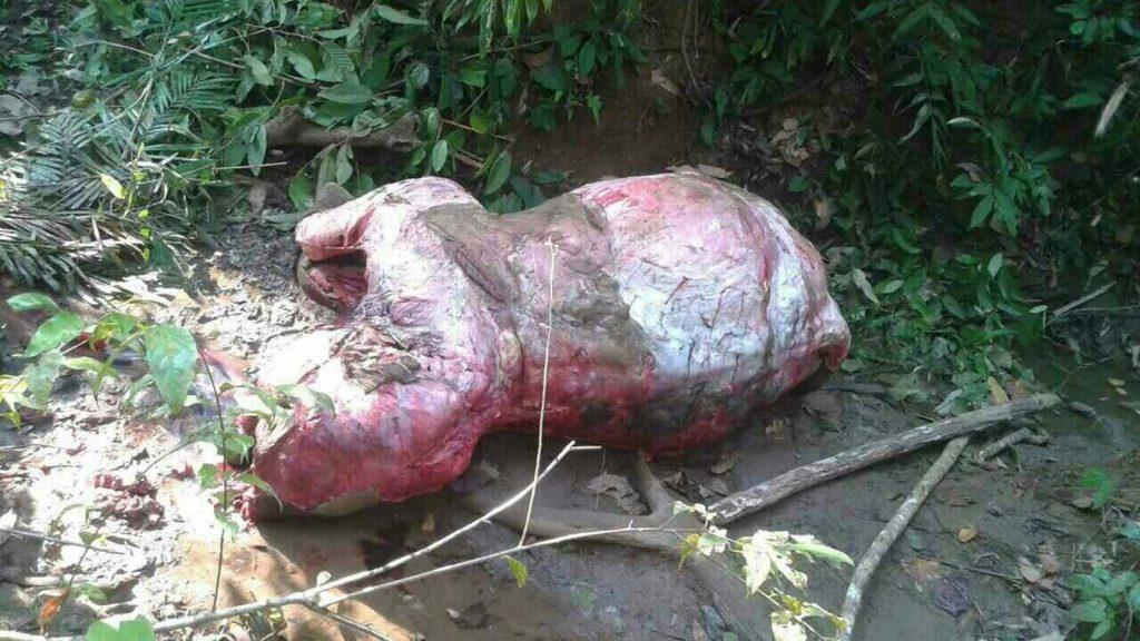 Photos show the elephant carcass and parts of elephant skin.Photo: Myanmar News Agency