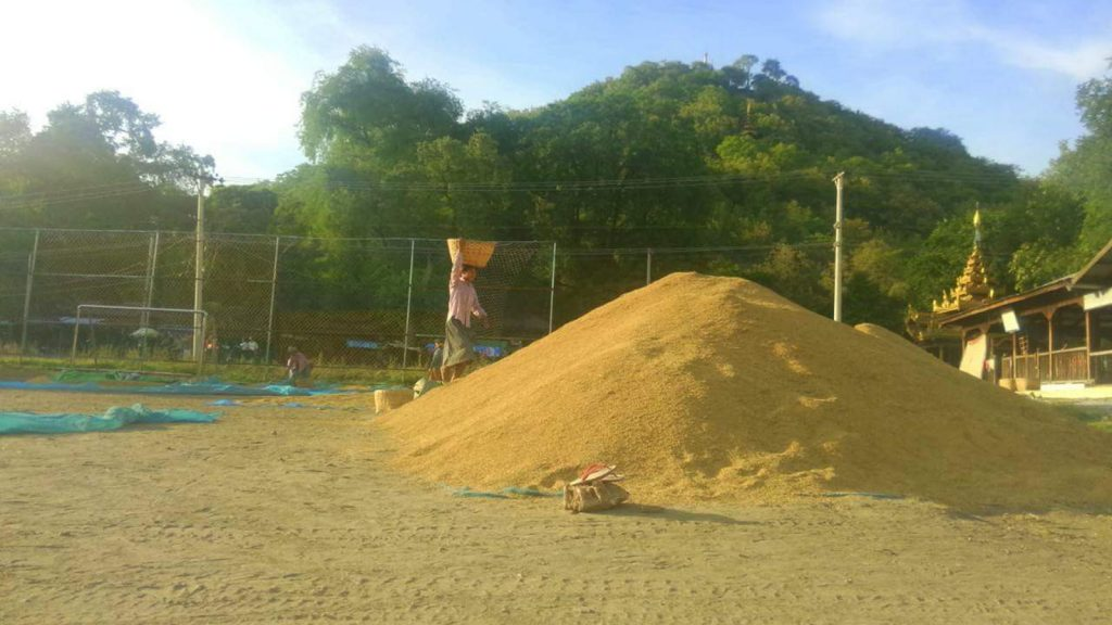 A woman piling  grains at a rice depot. Photo: supplied