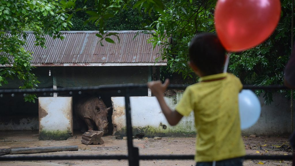 A boy looks at a rhinoceros at the Yangon Zoological Gardens. Photo: Phoe Khwar