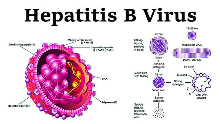 Hepatitis B2 copy