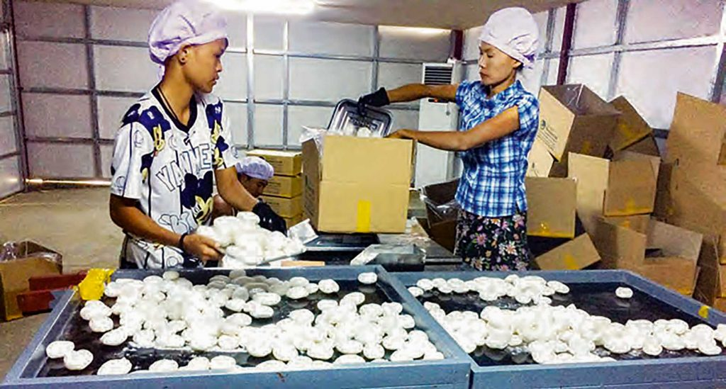 Ice apple being processed at a factory. Photo: MMAL