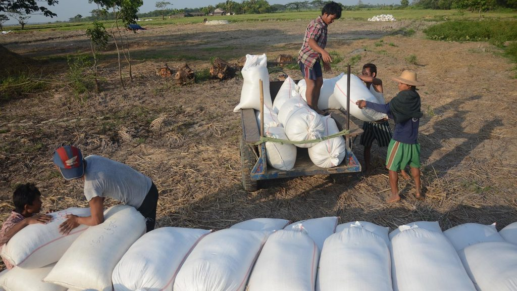 Export of agricultural products as of mid-August in the six-month interim period reaches US$1 billion.  Photo: Phoe Khwar