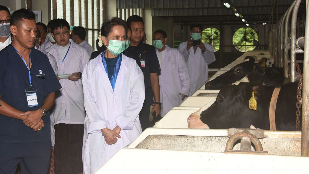 State Counsellor Daw Aung San Suu Kyi inspects the dairy farm at Pe Taw Village yesterday.Photo: MNA