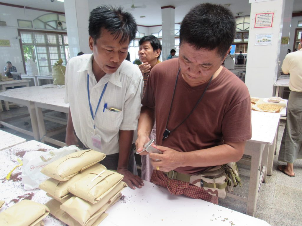 Merchants testing the quality of sesame put up for sale.Photo: Min Htet Aung (Mandalay Sub-printing House)