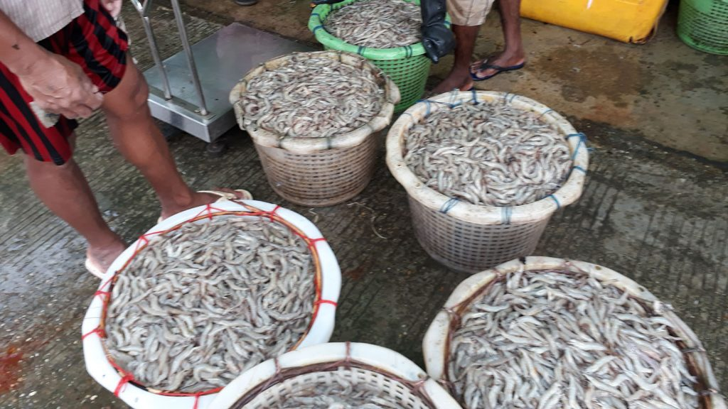 Shrimps from Pyapon seen at a market.Photo: Aung Win (Pyapon)