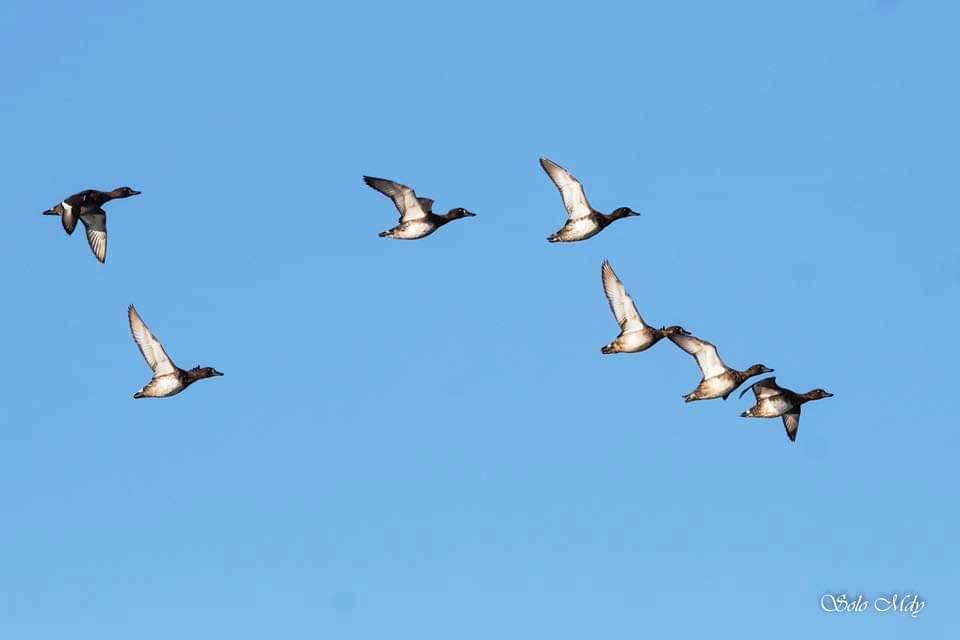 Winter birds  are migrating into  Myanmar from November through February. Photo: Khine Sett Wai