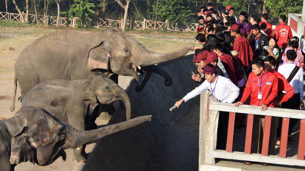 Ethnic cultural troupes feeding elephants at the elephant camp in Nay Pyi Taw.Photo: Kyaw Zin Htaik