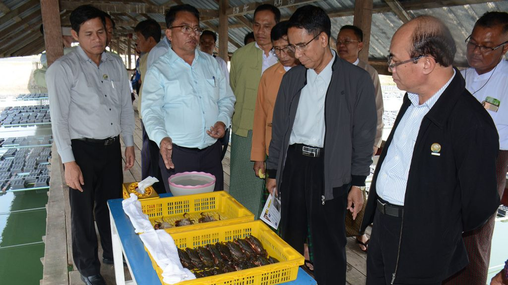 Union Minister Dr. Aung Thu and party visit modern salt-water shrimp breeding station. Photo : MNA