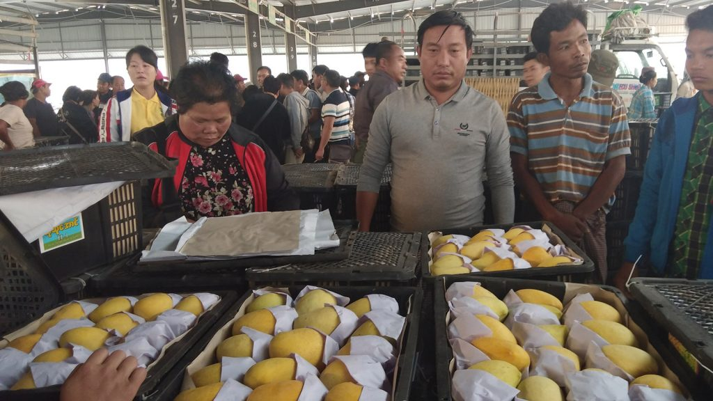 Traders observe to buy Sein Ta Lone Mangoes at the border market.Photo: Thant Zin (Muse)