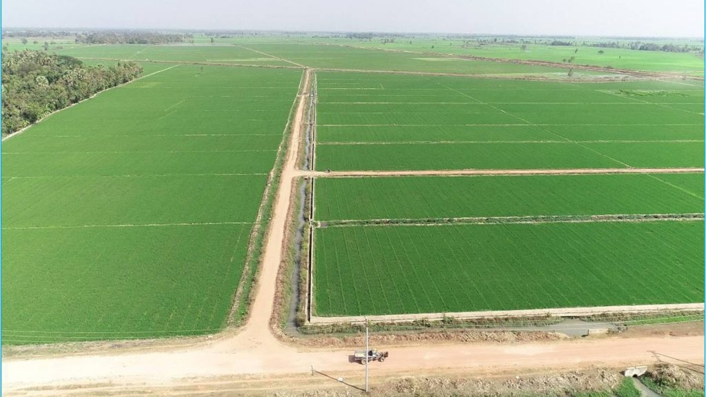 Photo shows farmlands irrigated by Khapaung Dam in the area.