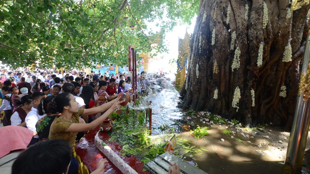 Buddhist devotees water the Bo Tree at the Shwedagon Pagoda  in Yangon to mark Buddha Day which falls on the Full Moon Day of Kason yesterday.Photo: Phoe Khwar