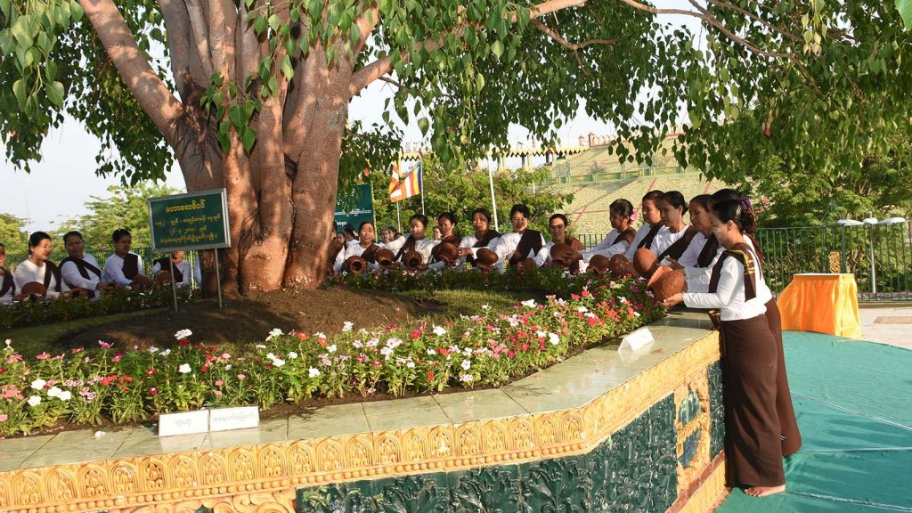Buddhist devotees pour water at the Bodhi Tree on the Uppatasanti Pagoda in Nay Pyi Taw yesterday.Photo: MNA