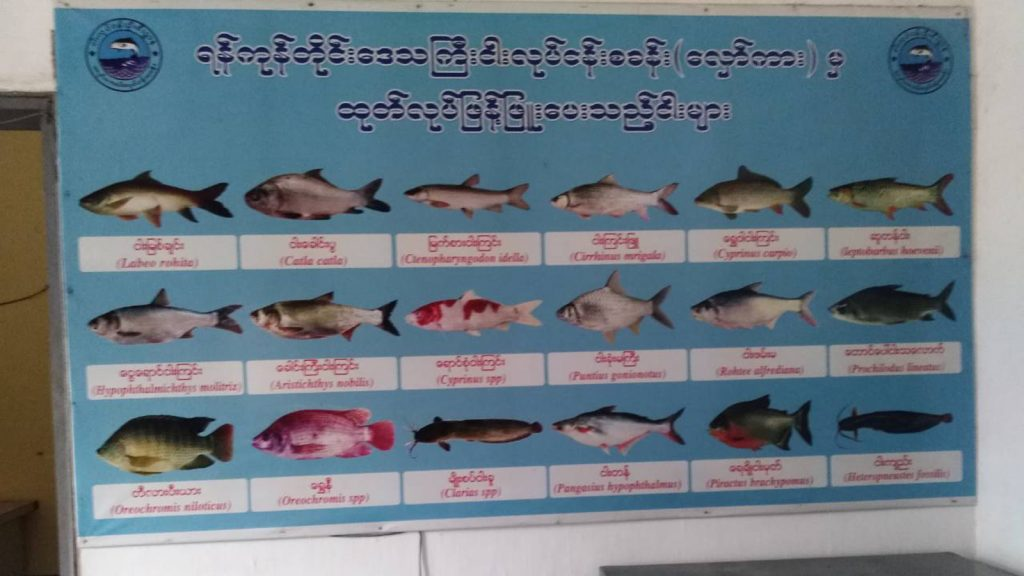 A poster shows fish species for breeding, hatching and rearing at the Hlawga Hatchery Centre . Photo: Than Htike