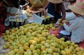 Mango growers face hurdles posed by higher prices for inputs