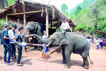 Elephant camp on Shan mountain range woos visitors