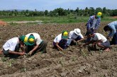 Agriculture Department inspects fields in Mindon Township for FAW