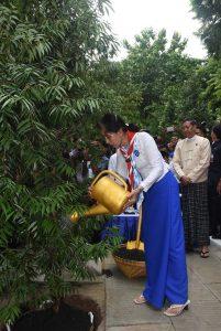 State Counsellor Daw Aung San Suu Kyi planting the Gangaw tree in Gangaw Park of Yangon University yesterday.Photo: MNA