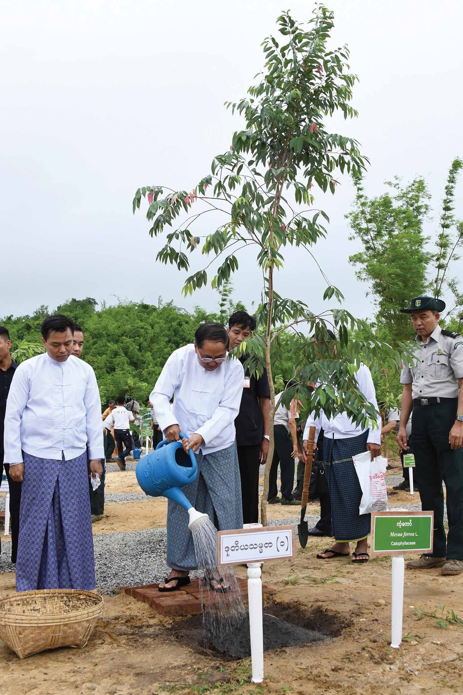 Vice President U Myint Swe plants a gangaw (Calophyllaceae) tree at the monsoon planting event for 2019 in Nay Pyi Taw.  Photo: MNA