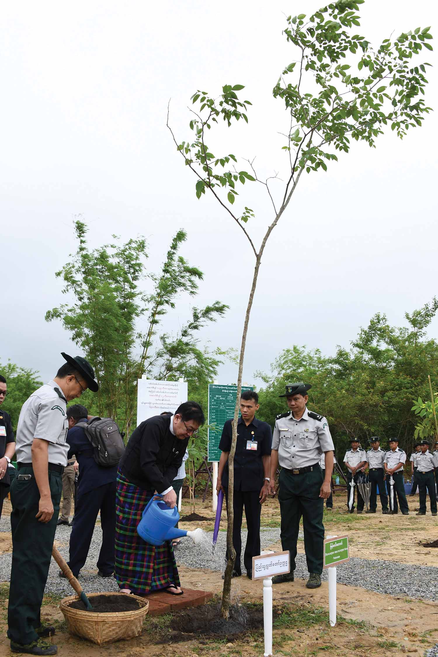 Pyithu Hluttaw Speaker U T Khun Myat plants a Padauk (fabaceae) tree at the monsoon planting event for 2019 in Nay Pyi Taw.  Photo: MNA
