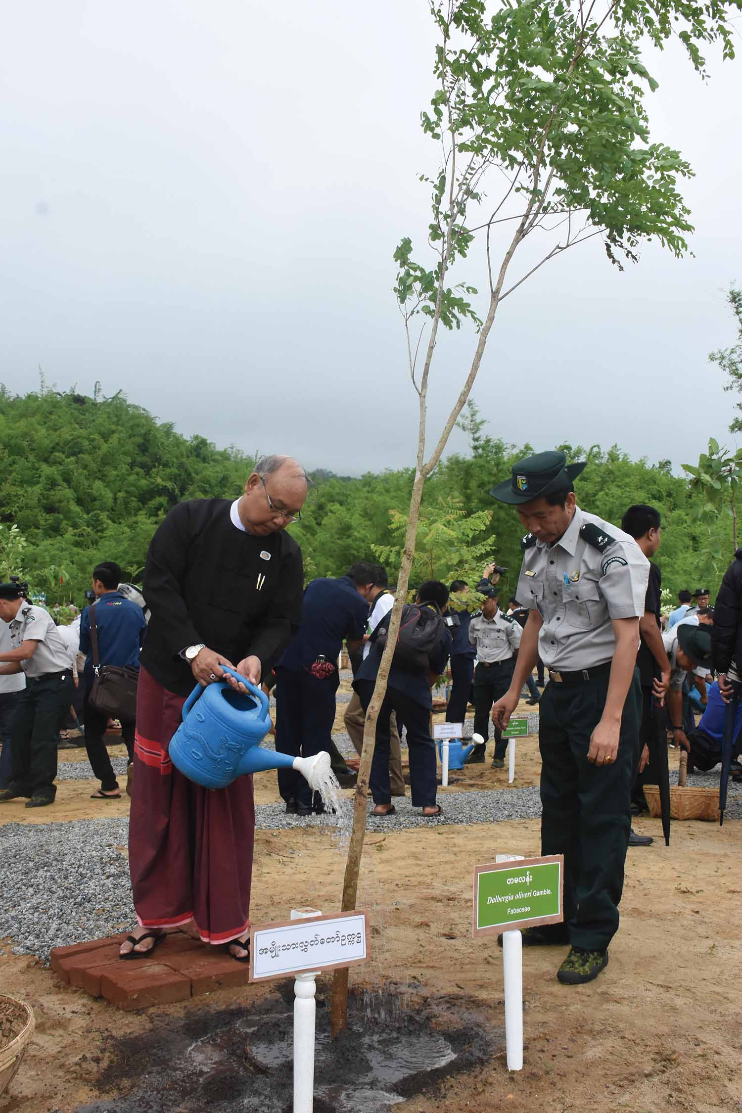 Amyotha Hluttaw Speaker Mahn Win Khaing Than plants a tamalan (fabaceae) tree at the monsoon planting event for 2019 in Nay Pyi Taw.  Photo : MNA