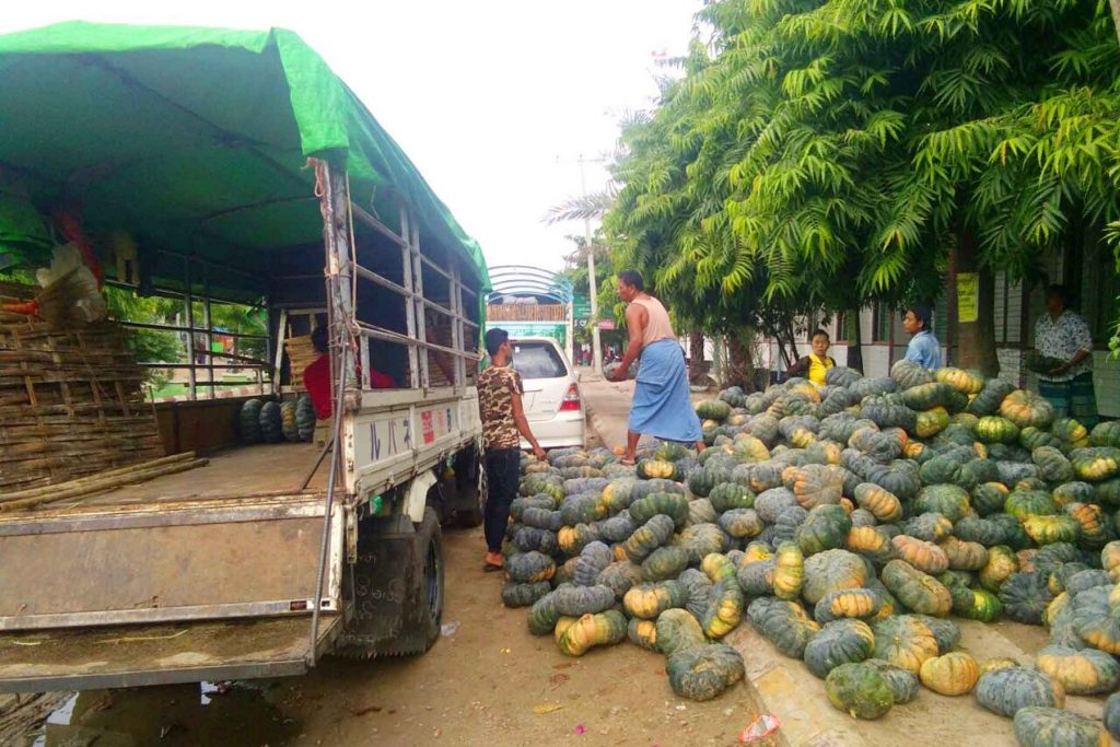 Farmers prepare to send pumpkins to the market in Lewe Township after the poor harvest this season. Photo: Thein Myint Kyaw (Meiktila)