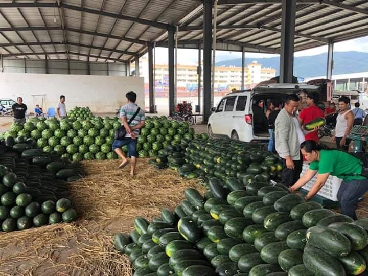 Watermelon copy