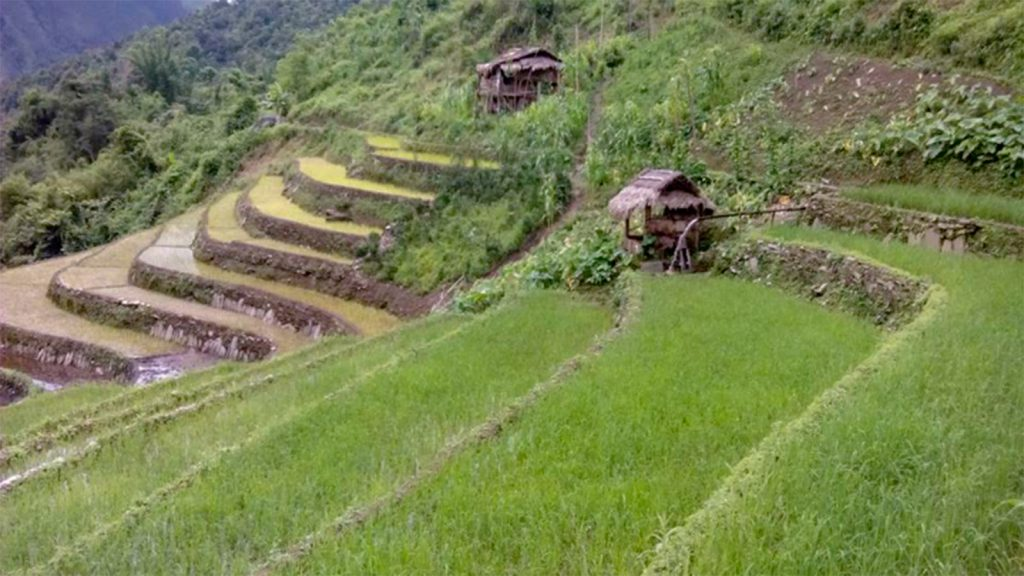 Terraced paddy fields seen in Naga Self-Administered Region.Photo : Win Oo (Zayyardine)