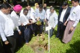 Sandalwood plants grown near Shwedagon Pagoda to mark Mahatama Gandhi's 150th birth anniversary