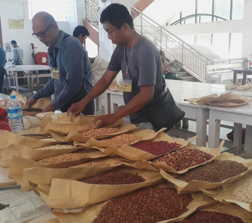 Traders evaluate quality of the various kinds of bean at the warehouse in Mandalay.Photo : Aung Thant Khaing (Mandalay)